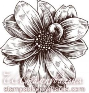 Stamp, flower, штамп, квітка, Космея