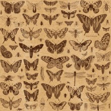 метелики на весь аркуш 1